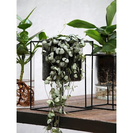 Duif Wholesale - Metal - Planter Catrice Black - Black
