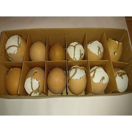 Duif Wholesale - Other - box/12 hanging hens egg brown 655220500 - Brown