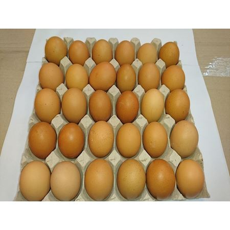 Duif Wholesale - Other - box/30pcs egg brown 884182100 - Brown