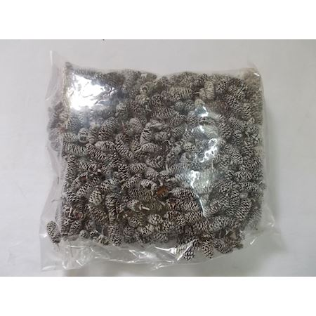 Duif Wholesale - Other - bag/14kg birch pine white tip 889454000 -